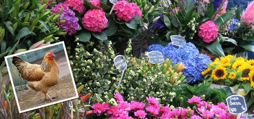 Talbott Garden Nursery Online Floral Nursery Garden Center
